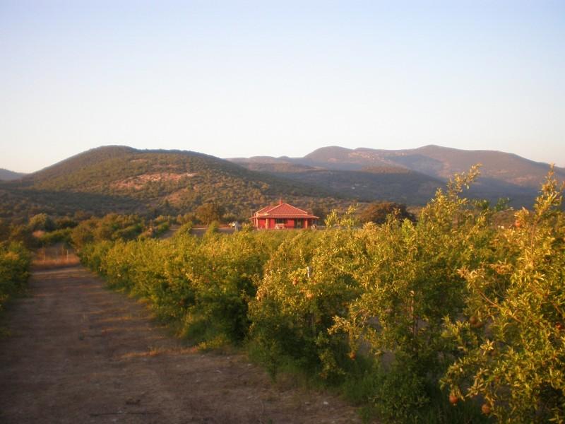 Φάρμα Στην Ορεινή Τριφυλία