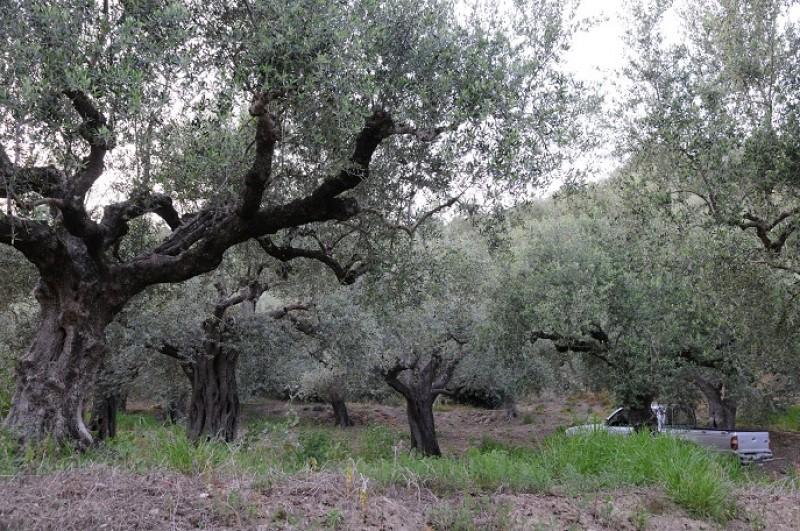 Αγροτεμαχιο στο Αμπελοφυτο