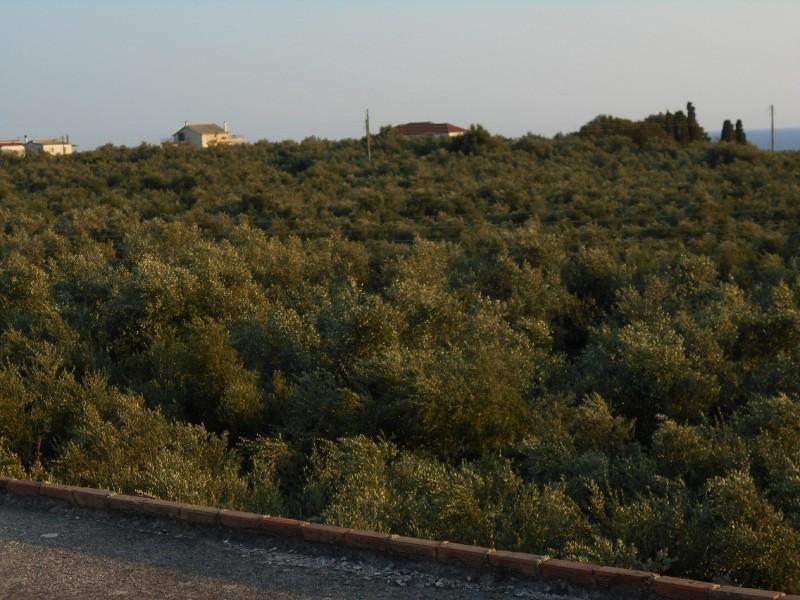 Οικόπεδο Στον Πύργο Τριφυλιας